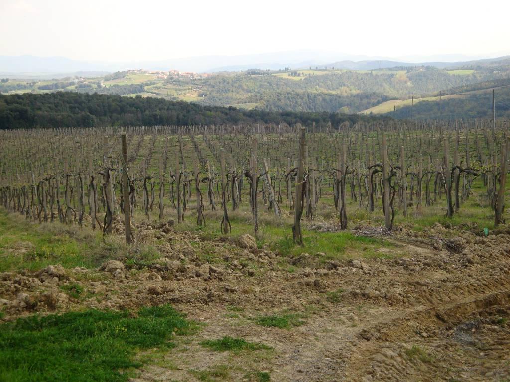 AZIENDA AGRICOLA VENDITA San Gimignano