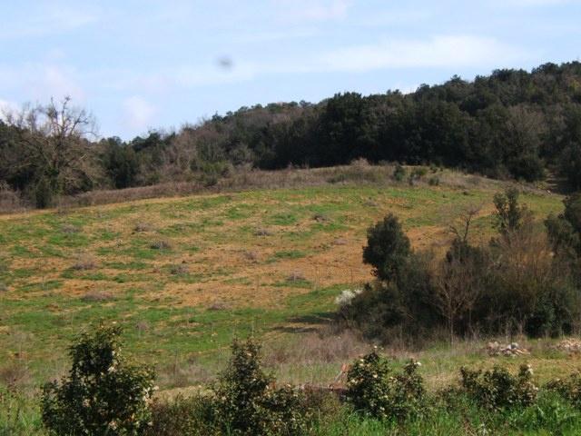 TERRENO AGRICOLO VENDITA Montecatini Val Di Cecina