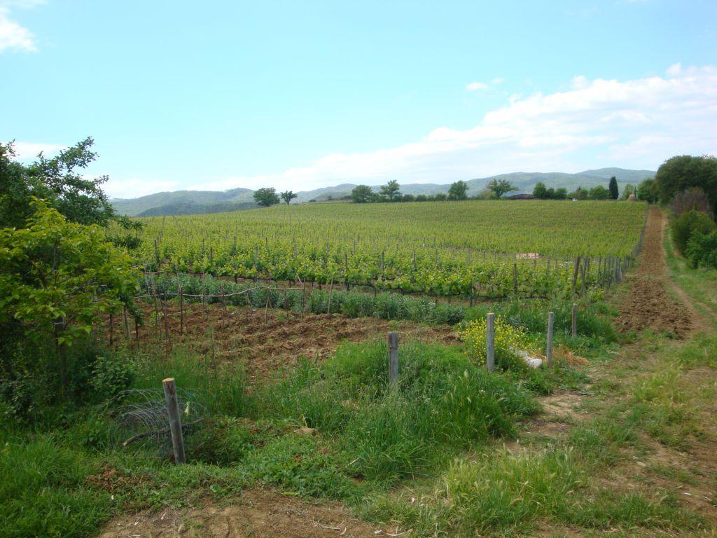 AZIENDA AGRICOLA VENDITA Montalcino