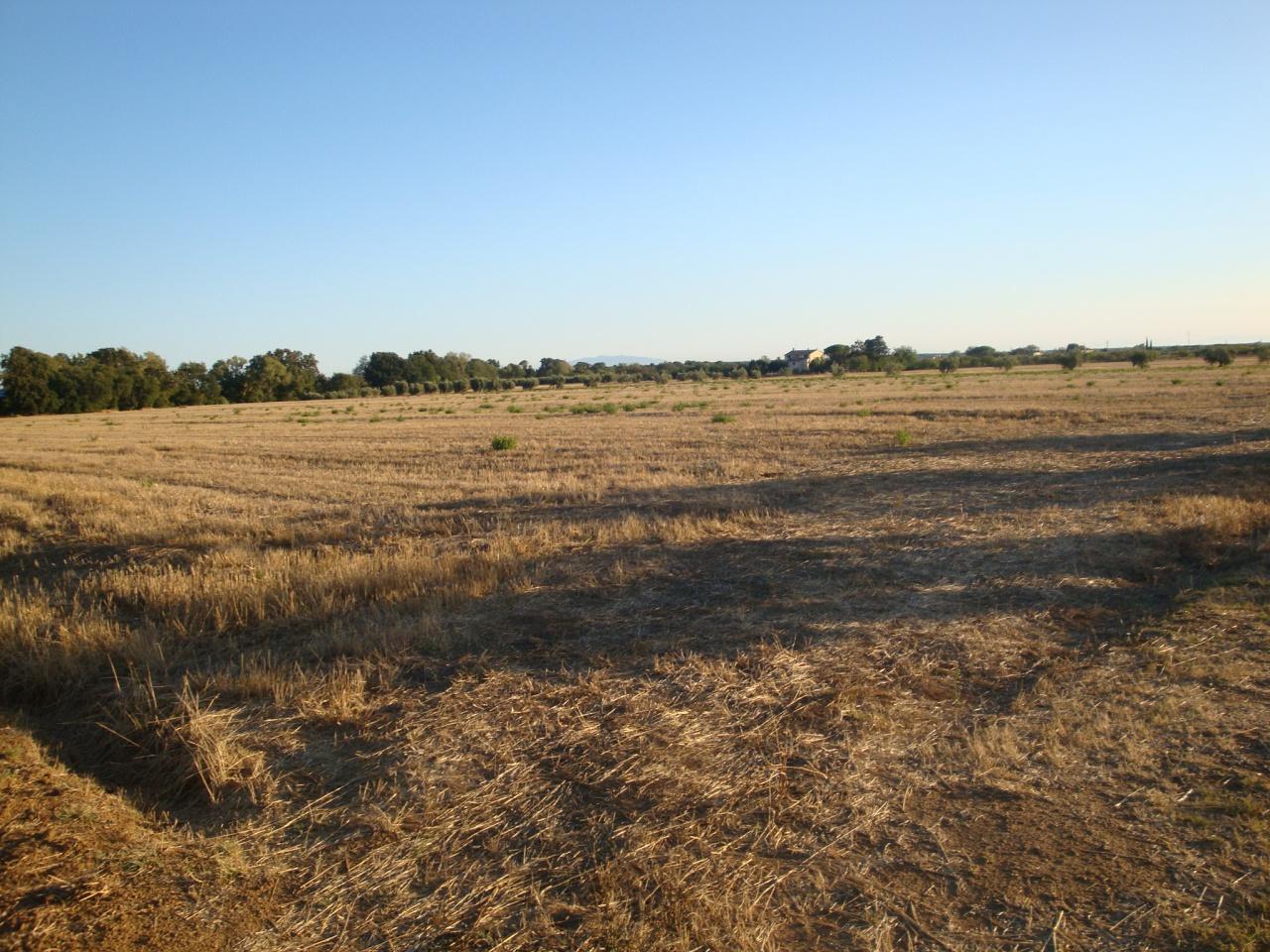 terreno agricolo vendita cecina