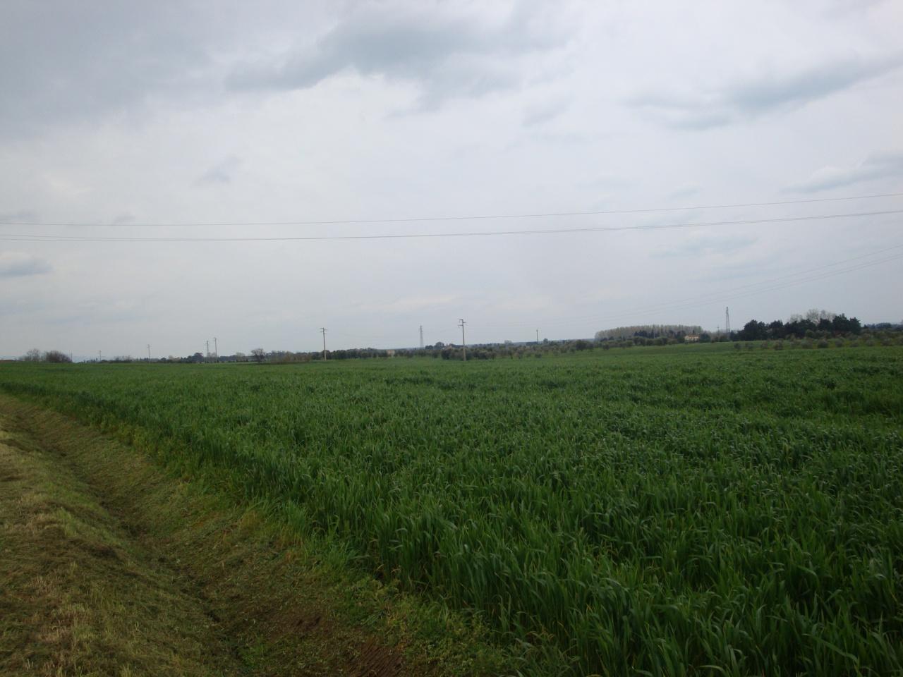 terreno agricolo vendita bibbona